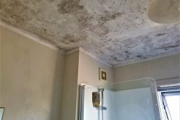 mould specialist Auckland